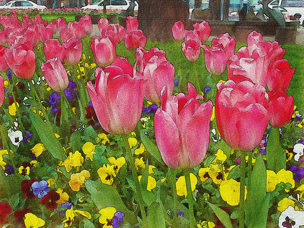 Tulip Sisters Watercolor Photograph  - Tulip Sisters Watercolor Fine Art Print