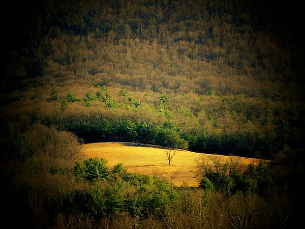 Valley Tree Photograph  - Valley Tree Fine Art Print