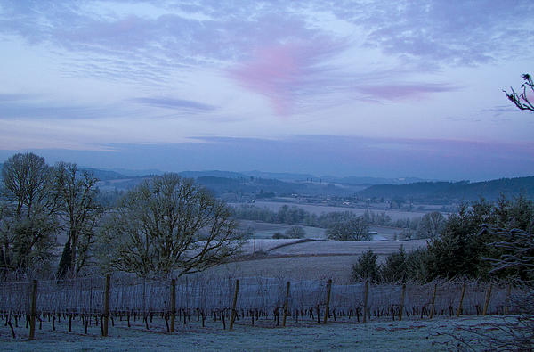 Weather Photograph - Vineyard Morning Light by Jean Noren
