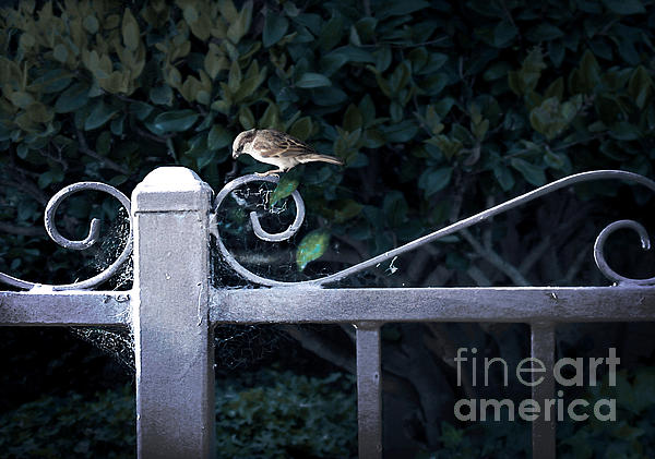 Blended Photograph - Waiting For Your Call by Ellen Cotton