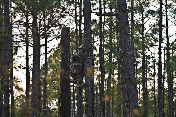 Woods Photograph - Waiting Game by Jessica Brown