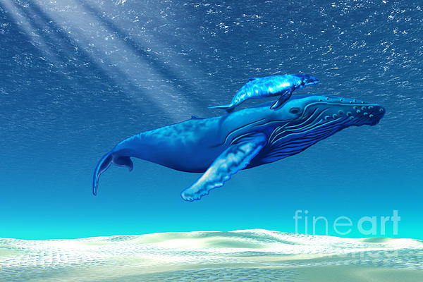 Whales Print by Corey Ford
