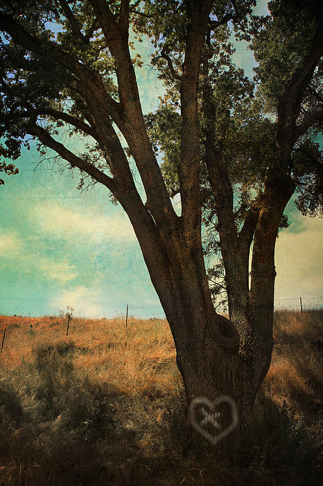 Sunol Regional Wilderness Photograph - Where Well Meet by Laurie Search