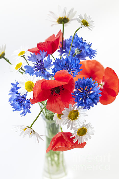 Flowers Photograph - Wildflower Bouquet by Elena Elisseeva