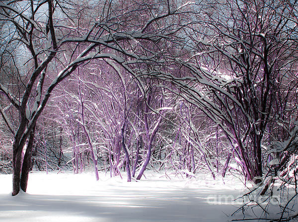 Winter Photograph - Winter Faeries by Barbara McMahon