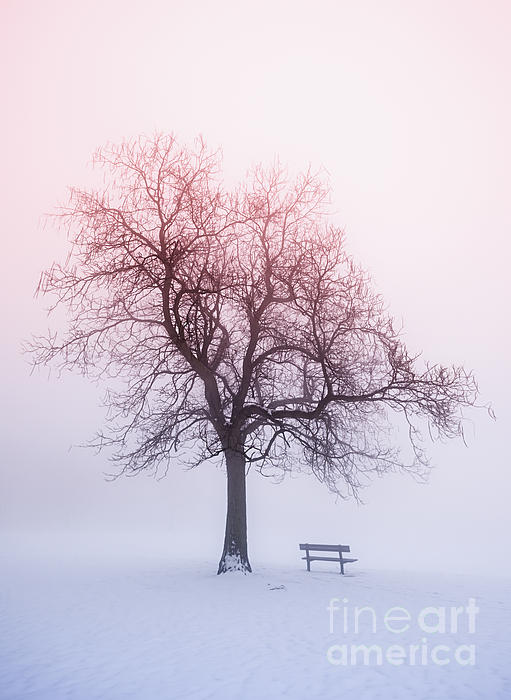 Trees Photograph - Winter Tree In Fog At Sunrise by Elena Elisseeva