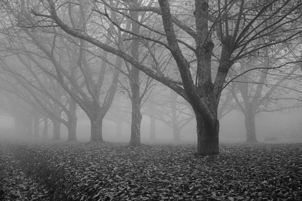 Autumn Photograph - Winter Trees In The Mist by Georgia Fowler