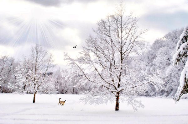 Snow Scene Photograph - Winter Wonderland by Emily Stauring