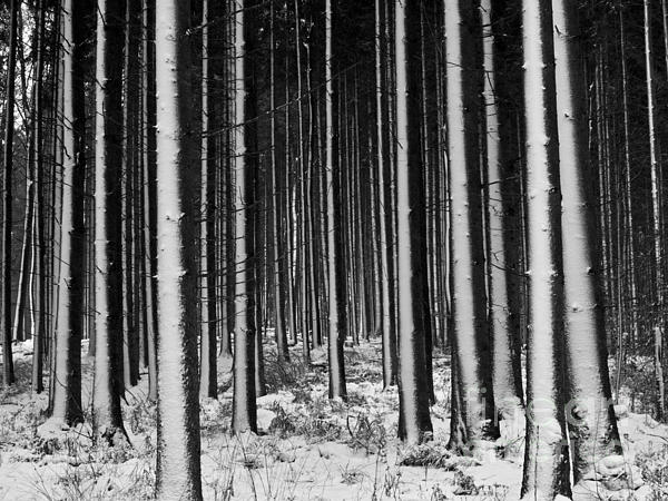 Heiko Koehrer-Wagner - Winter Woodlands