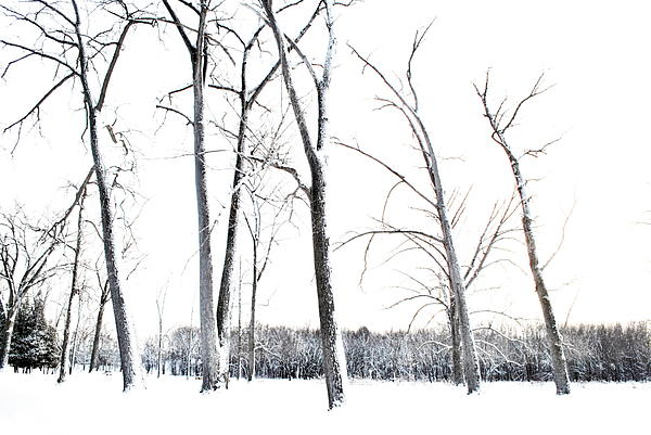 Tree Photograph - Winters Glory by Emily Stauring