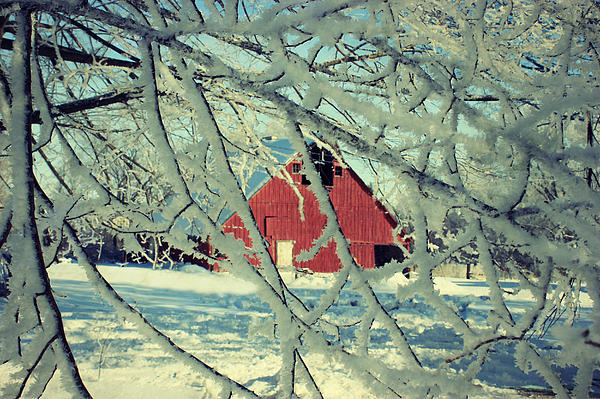 Barn Photograph - Wintery Red Barn by Julie Hamilton
