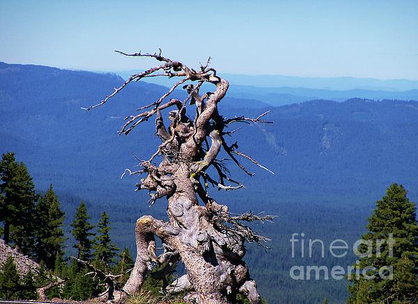 Photography Moments - Sandi - Work of nature - Crater Lake National Park