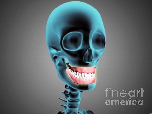 Biomedical Illustrations Digital Art - X-ray View Of Human Skeleton Showing by Stocktrek Images