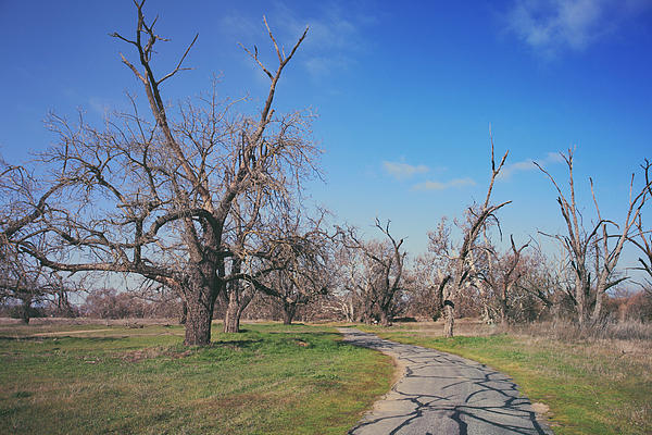 Sycamore Grove Park Photograph - You Gave Me A Reason by Laurie Search