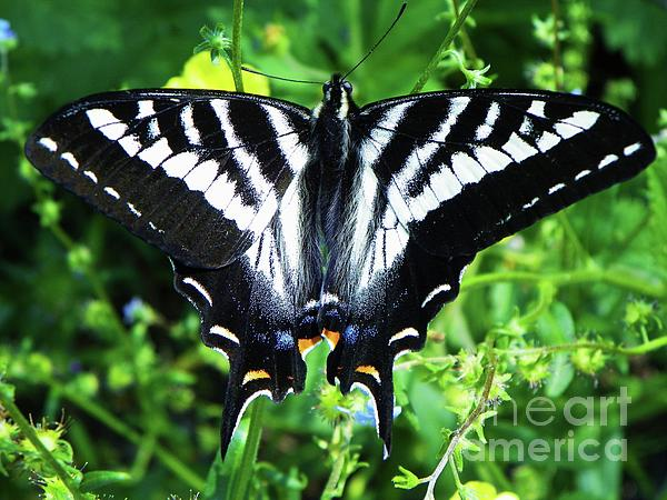 Photography Moments - Sandi - Zebra Swallowtail Butterfly