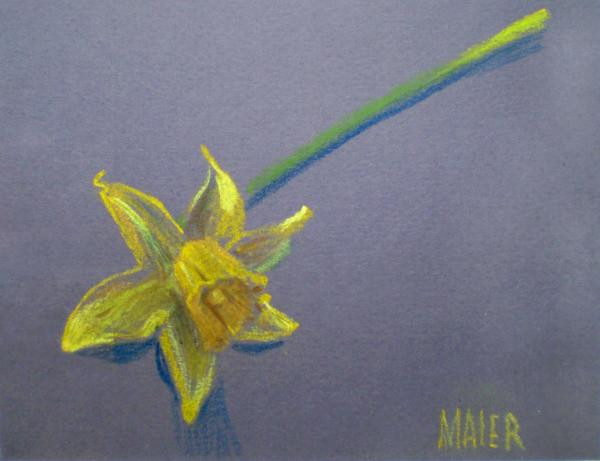 Daffodil Drawing - Daffodil Fine Art Print. Daffodil Drawing by Donald Maier