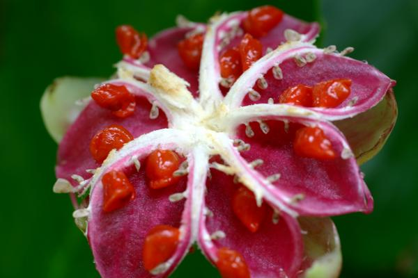 Tropical Flower Image