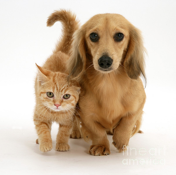 Animal Photograph - Kitten And Puppy by Jane Burton