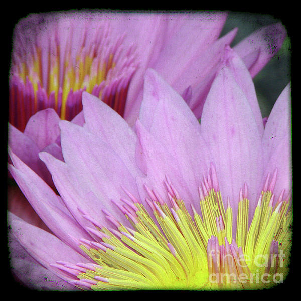 Photography Floral Art  Mixed Media  - Photography Floral Art  Fine Art Print