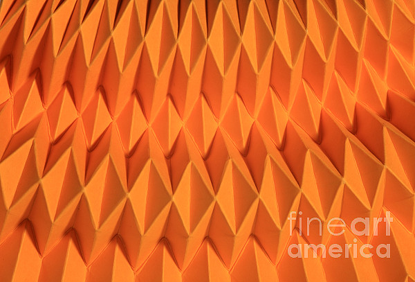 Origami Photograph - Mathematical Origami by Ted Kinsman