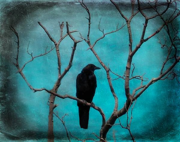 Gothicolors With Crows - Aqua Twilight