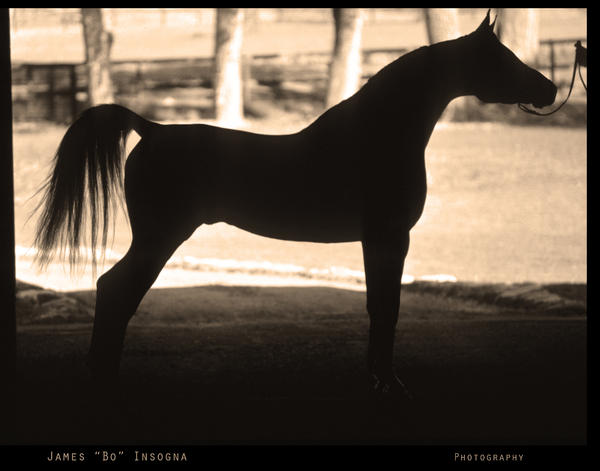horse pictures to print. Arabian Horse Silhouette Sepia