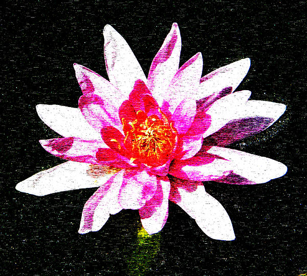 Artistic Interpretation Of A Water Lily Photograph