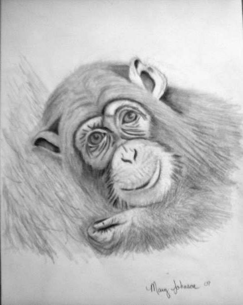 monkey drawings, ape drawings, baby drawings