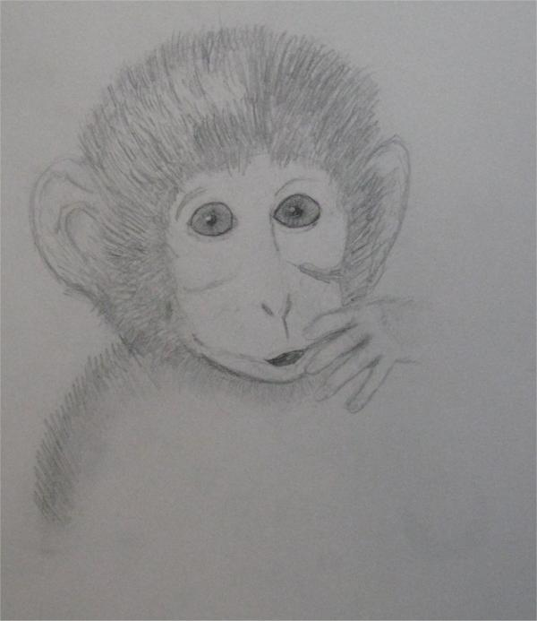 Baby Monkey Drawing by Katie Gilbert. Tags: monkey drawings, baby drawings,