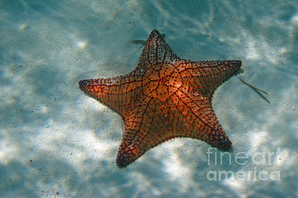Bob and Nancy Kendrick - Bahamas Starfish