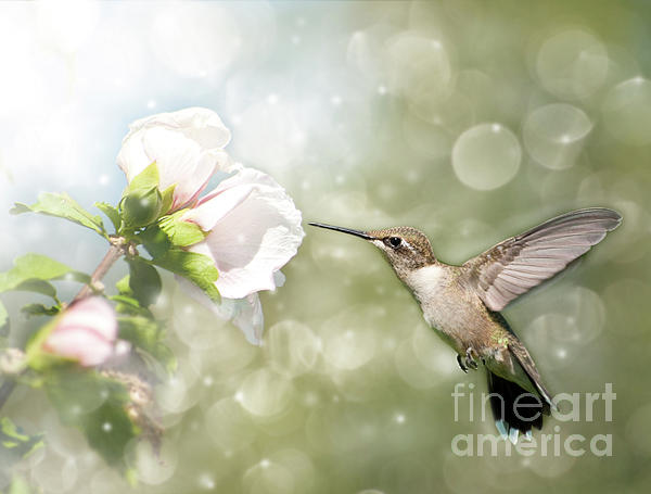 Beauty In Flight Photograph  - Beauty In Flight Fine Art Print
