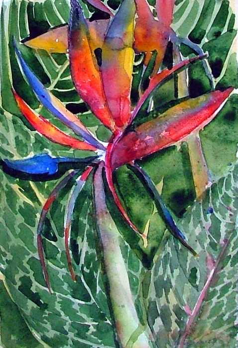 watercolor paintings of birds. Bird of Paradise Painting