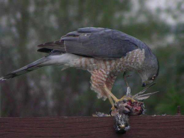 pics of birds of prey