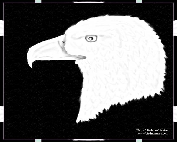 black and white eagle
