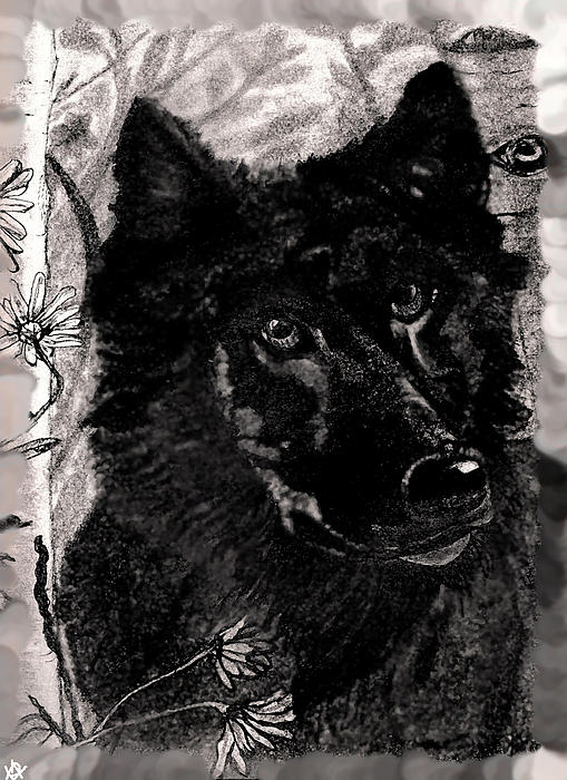 black and white wolf drawings. lack and white wolf drawings;