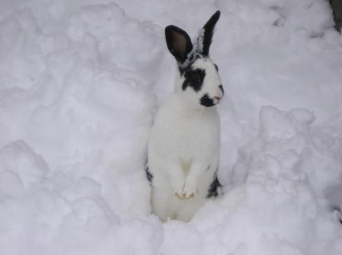 I'm getting a pet bunny! Bunny-in-snow-mac-one-productions