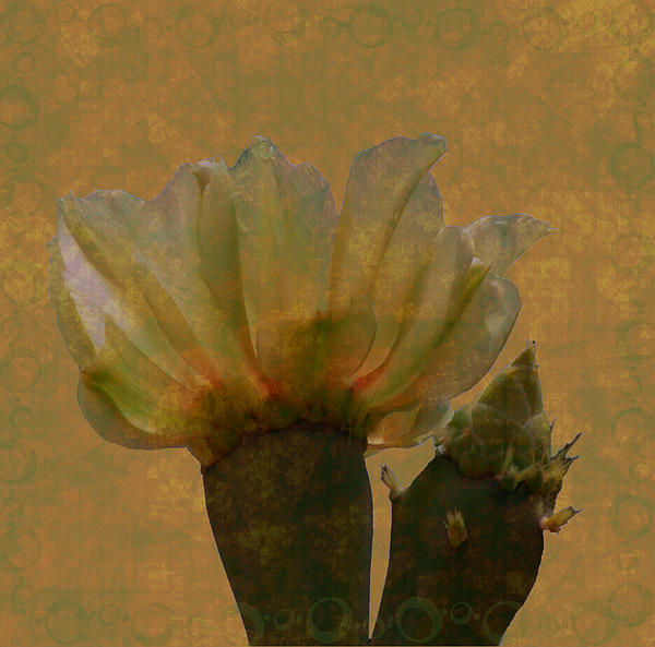 Rosalie Scanlon - Cactus Flower in Grunge