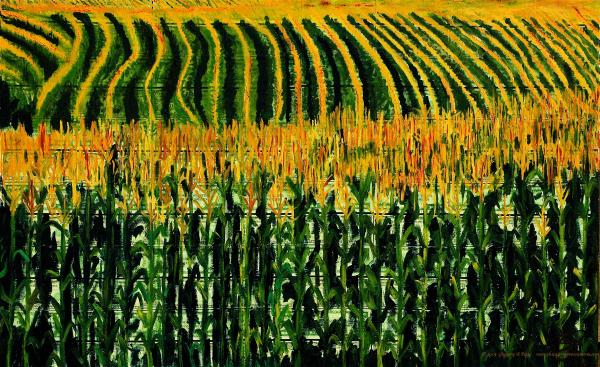 Cash Crop Corn Painting by Gregory Allen Page - Cash Crop Corn ...