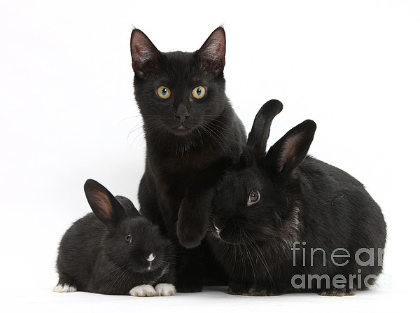 Animal Photograph - Cat And Rabbits by Mark Taylor
