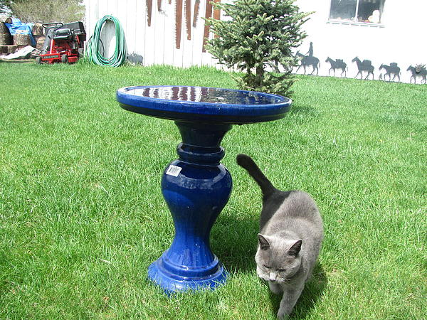 Cat By Birdbath Photograph