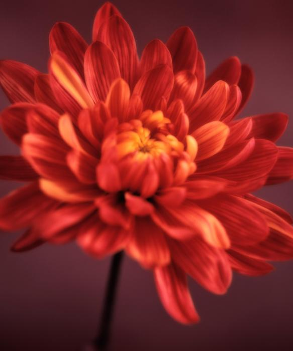 "the use of flower to symbolize elisa in the chrysanthemums by john steinbeck In the story ""the chrysanthemums"" by john steinbeck, the chrysanthemums symbolize elisa's confidence and her feminist side."