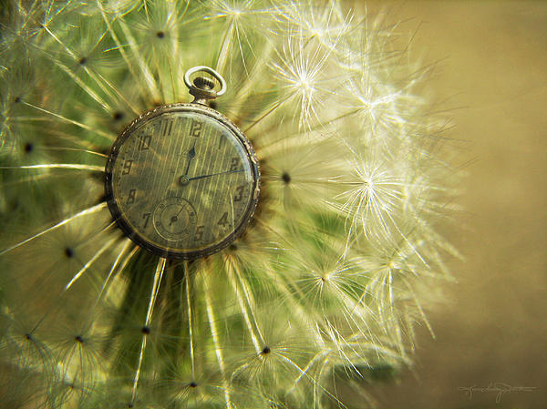 Karen Casey-Smith - Dandelion Clock