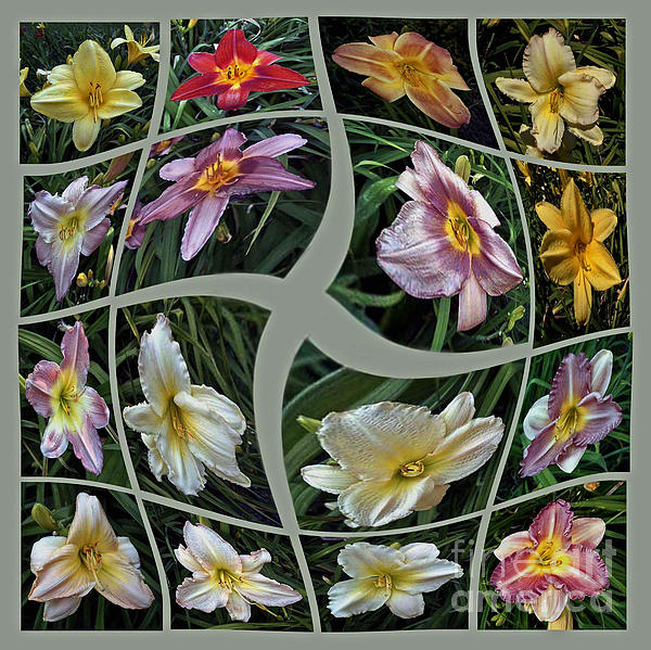 ImagesAsArt Photos And Graphics - Daylily