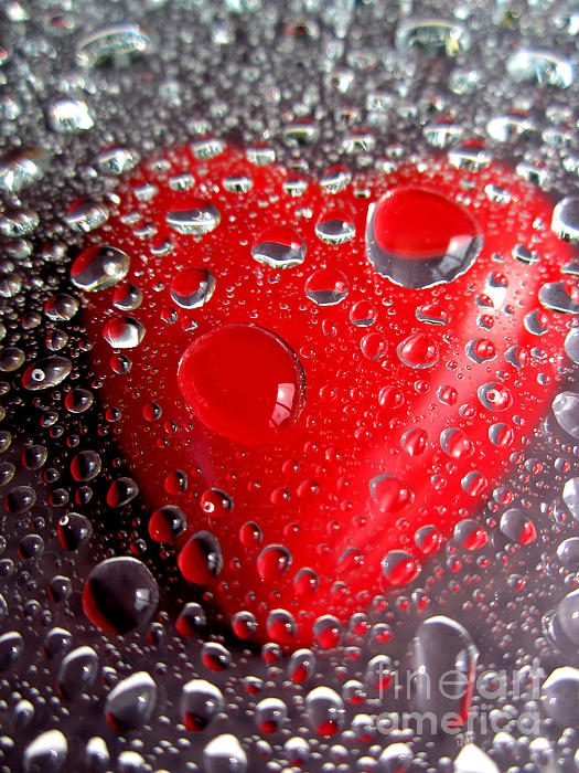 Jenelle Trader Photography - Dew Drop Heart