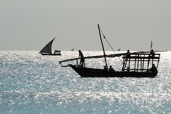 Kendwa Photograph - Dhows by Alan Clifford