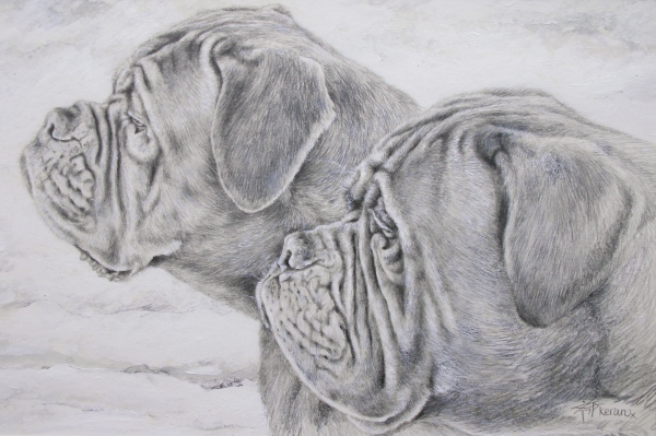 ... mastiff pup found adverts neopolitian mastiff ulimate mastiff dogue