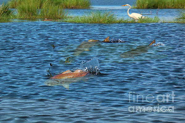 Bonefish Painting - Duck Pond Reds by Alex Suescun