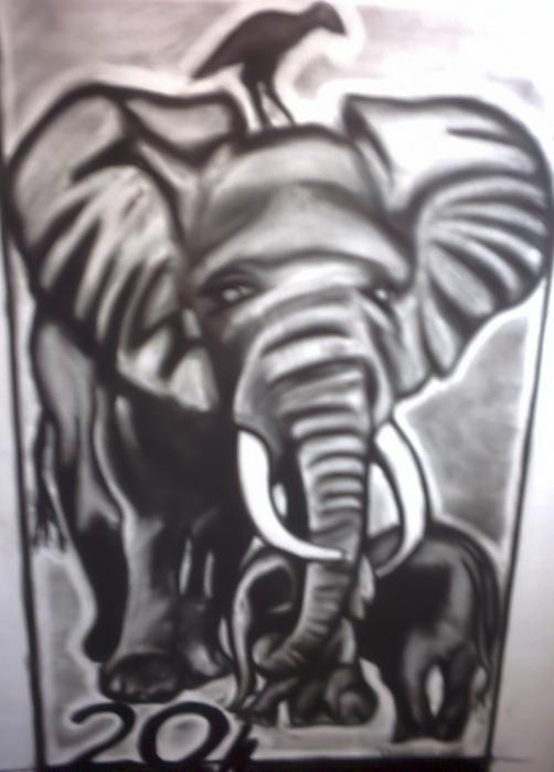 black and white elephant pictures
