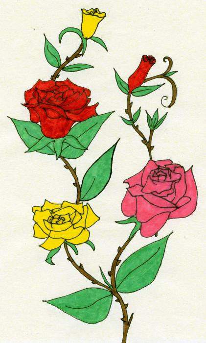 colour drawings, roses