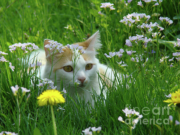 Flower Cat Photograph  - Flower Cat Fine Art Print
